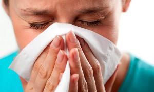 Аллергия на амброзию — причины, симптомы, лечение, профилактика