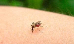 Укусы насекомых — как узнать кто укусил?