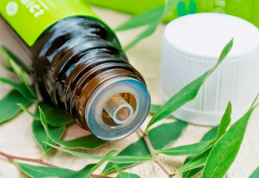 Масло чайного дерева - состав, полезные свойства, применение в косметологии